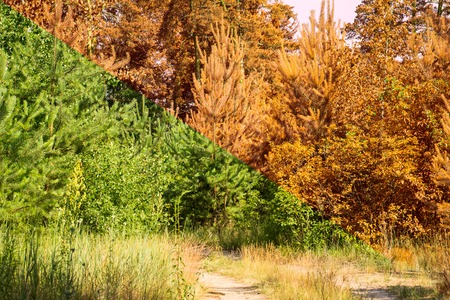 transition of the summer season into autumn green plants become orange a very beautiful and exciting world around us