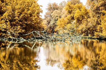 autumn trees with yellow foliage grow over the river spectacular landscape calm water with reflection of the sky and trees