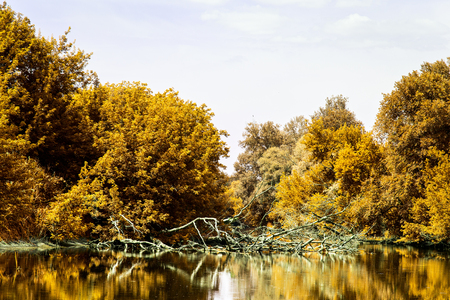 nature of autumn trees with orange foliage grow near the river reflecting in it cleanly and no one around the golden time of the year
