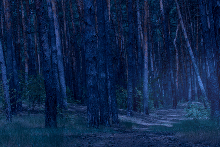 path leads to a highlighting part of the evening forest a mysterious glow and no one around is scary and exciting 版權商用圖片
