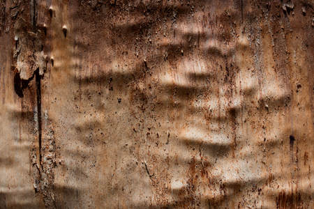 bright wooden texture with a peeled bark and a non smooth surface background for design