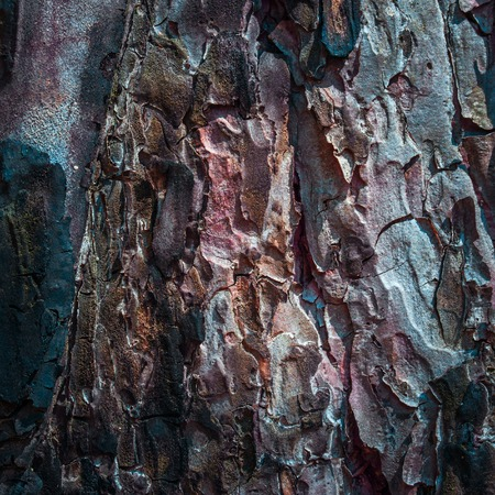 fantastic tree bark texture mysterious and exciting atmosphere natural background for design