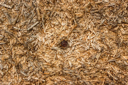 texture of wood shavings with hammered nail in the middle of an industrial background for design