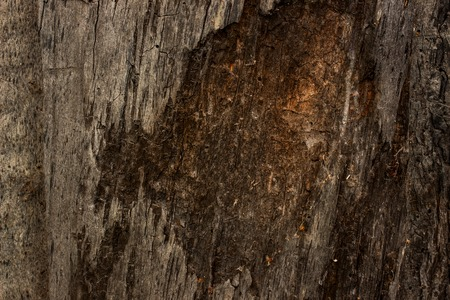 mysterious texture of wood with a peeled surface and cracked natural background for design Standard-Bild
