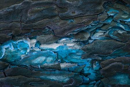 mystical pine wood texture close-up with blue center and dark bark natural background for design Standard-Bild