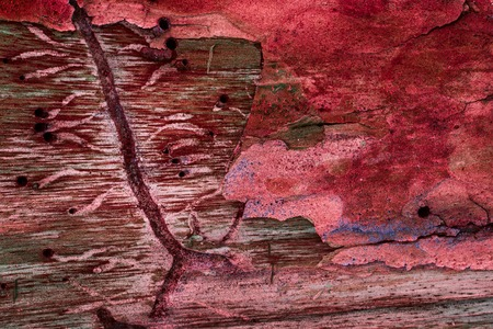 red texture of pine wood and cracked bark close-up mystical patterns of a mysterious forest natural background for design