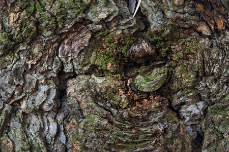 fantasy tree bark texture covered with bright green moss and sunlit close-up background for design