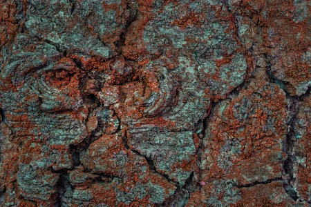 mystical bark texture of a tree covered with orange moss closeup grunge background for design concept of nature Standard-Bild