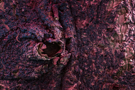mystical texture of tree trunk closeup of enchanting colors natural background for design