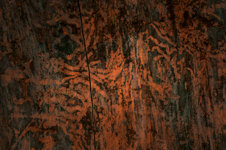 mystical natural patterns left by insects on the surface of a pine tree closeup of a mysterious atmosphere background for design Standard-Bild