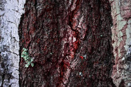 dark and mystical birch trunk with red wood close-up natural fantastic background for design Standard-Bild