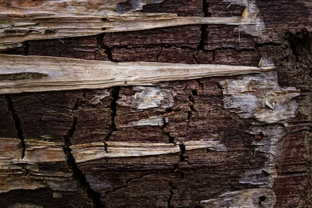 mysterious dark wood with remnants of bark in the form of sharp triangles close-up forest background for design