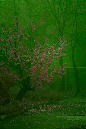 fantastic autumn night tree with pink leaves partially fallen on the background of fog mysterious atmosphere Stock fotó
