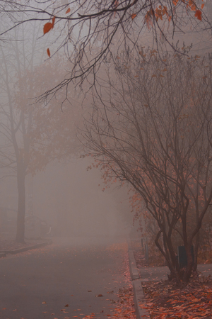 mysterious autumn courtyard covered with thick fog are fallen orange leaves on an asphalt road city landscape