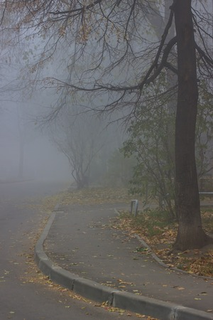 an asphalt road on which there are fallen yellow leaves leads into the courtyard covered with thick fog concept of autumn and mystical nature