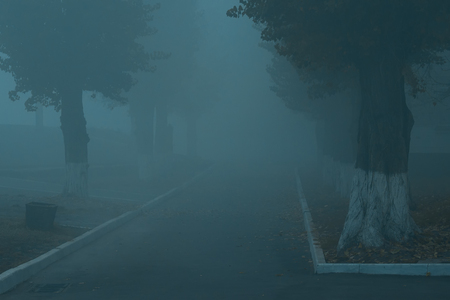 tall trees grow along an asphalt road the street is covered with thick mysterious fog no one around the concept of weather and nature Standard-Bild