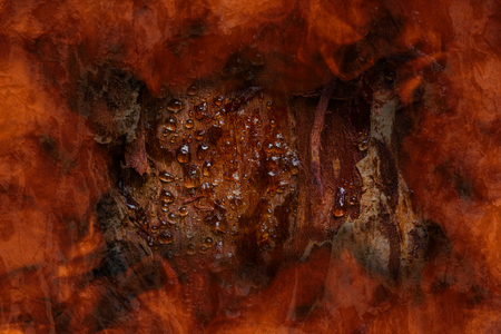 Pine tree texture closeup with peeled resin bark on tree trunk around orange flame frame concept of nature and forest fires background for design