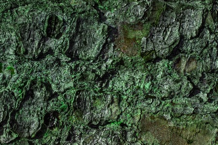 forest wild texture tree trunk covered with gray bark and green moss background for design