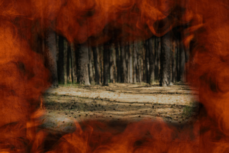 Fiery orange frame around a blurred pine forest The concept of nature and fire
