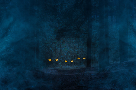 mysterious orange eyes of wild animals sparkle in the night coniferous forest covered with blue mist the concept of nature and wilderness