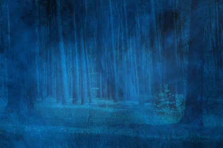 night pine forest with tall trees covered with blue mystical fog concept of wildlife 스톡 콘텐츠