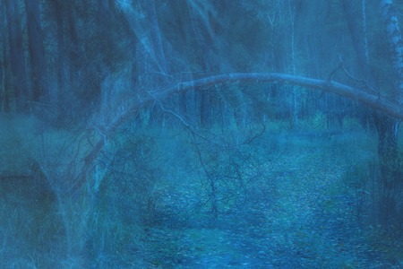 mystical wooden arch of fallen tree against the background of the evening forest covered with a ghostly blue mist wildlife concept Standard-Bild