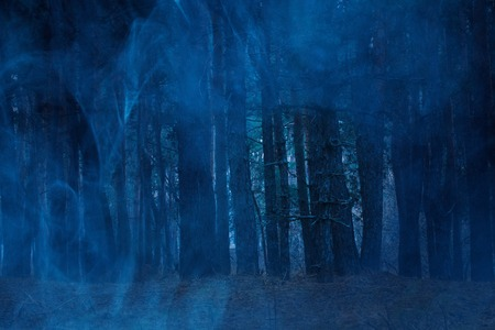 mysterious tall pines behind the blue ghostly mist night breathtaking forest no one around the concept of nature and Halloween