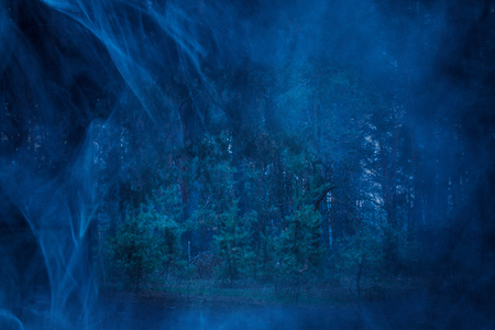 ghostly night forest with fluffy green pines is scary and no one around is just wilderness and blue mist halloween concept