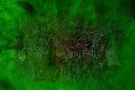 tree trunk texture in green ghostly mist background for design concept of nature and mystery Stock Photo