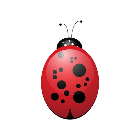 cartoon ladybird funny and cute insect on a white background object for design Illustration