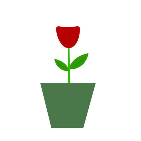 red flower in a pot concept of gardening and nature object on a white background