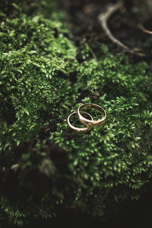 luxury wedding rings lying on the leaves and grass. Banque d'images