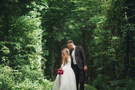 신혼 부부의 열정적 인 키스는 일몰에 공원에서 somewhwere.