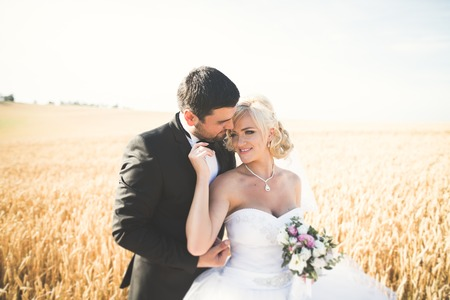 Elegant stylish happy blonde bride and gorgeous groom posing in wheat field on the background blue sky. Stock Photo