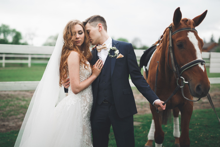 uomo a cavallo: Bride and groom in forest with horses. Wedding couple. Beautiful portrait in nature
