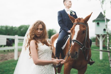 Newly married wedding couple stand with beautiful horse on nature Reklamní fotografie