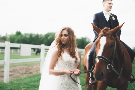 Newly married wedding couple stand with beautiful horse on nature Imagens