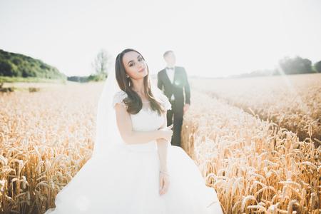 Beautiful wedding couple, bride and groom posing on wheat field with blue sky Фото со стока