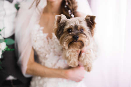 Beautiful luxury bride plays with funny fluffy dog