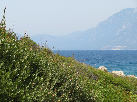 Mediterranean landscape - the view from the green island