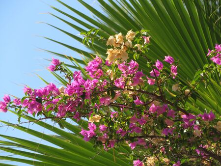 Flowers on a background of palm branches