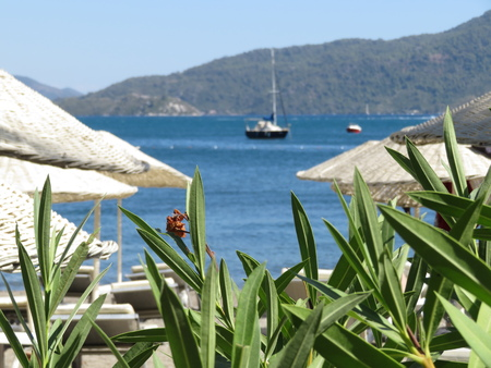 Beach with sunbeds and tropical plants on the coast Banco de Imagens