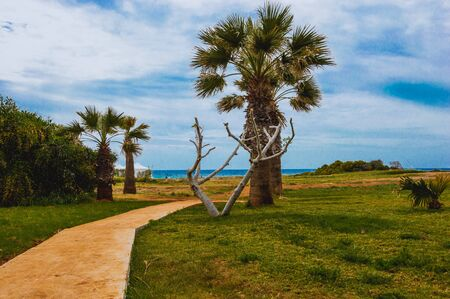 A green lawn with palm trees against the blue sky and sea on a warm summer day. Фото со стока