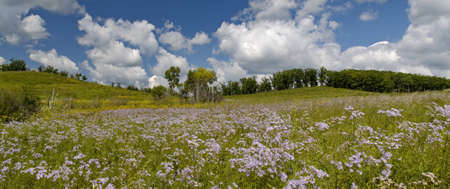 Summer panorama a blossoming meadow and the cloudy sky   photo
