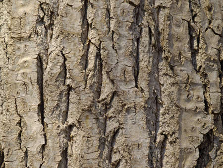 Natural background from a bark of an old tree
