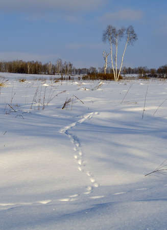 Animal trace on snow in the field photo