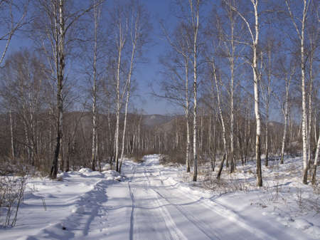 Winter sunny day on the brink of birch wood Stock Photo - 16018407