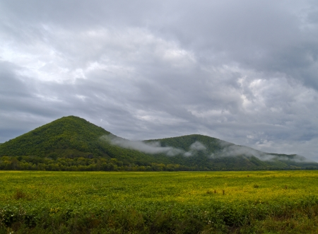 brink: Morning landscape on the brink of a soya field
