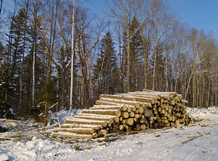 Stack of wood trunks in a taiga Stock Photo
