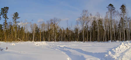 In the winter sunny day on a taiga glade Stock Photo